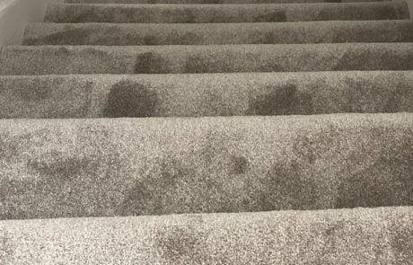1 1 460x295 - Lifestyle Floors Carpet