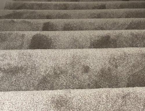Lifestyle Floors Carpet